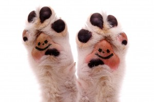 HappyPaws.jpg
